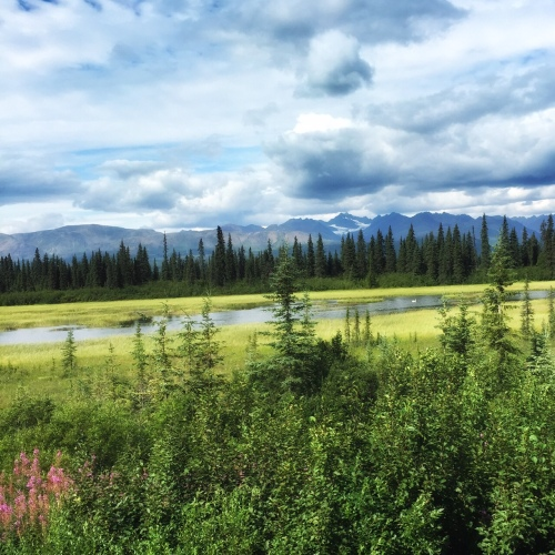 On the train, almost in Denali National Park