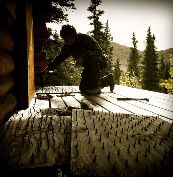 Installing welcome mats for grizzly bears