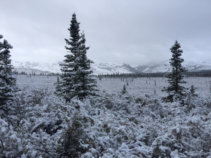Photo of snow at the Alaska cabin during the first week of September 2015