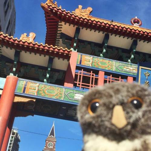 Owlish Chinatown