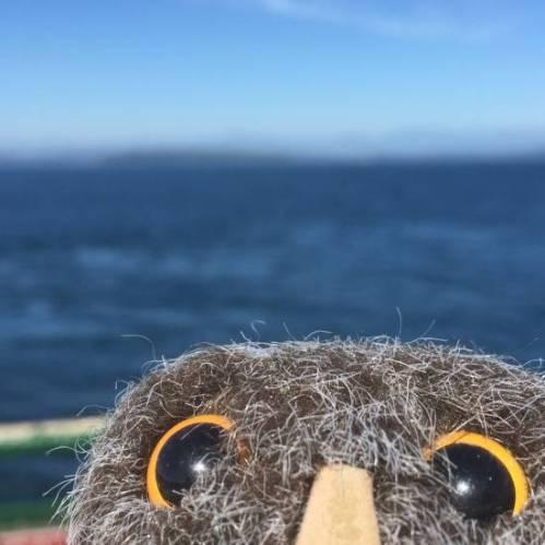 Owlish Ferry