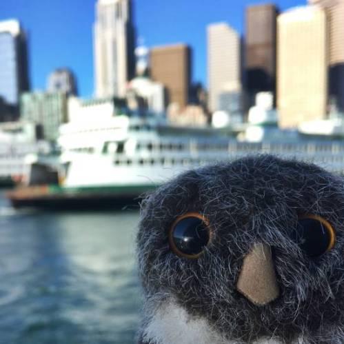 Owlish Seattle 1