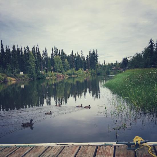Chena Ducks
